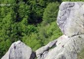 Диви кози по Караджов камък