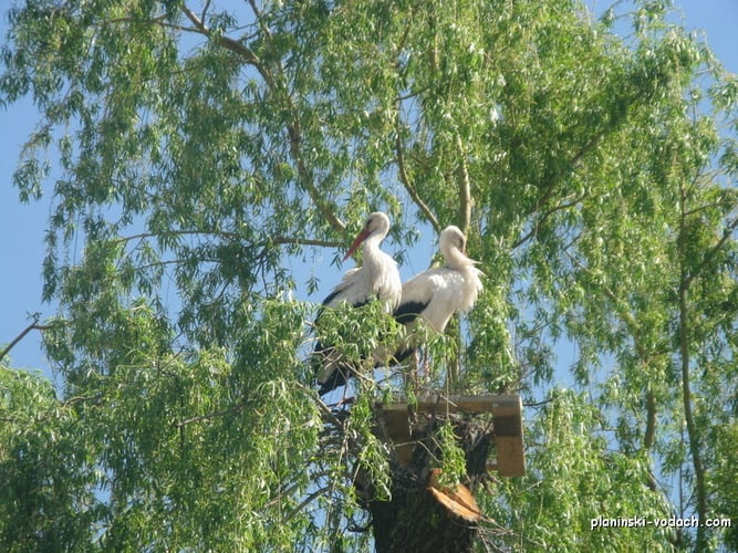 Storks we saw on our bike trip - in the village of Banya