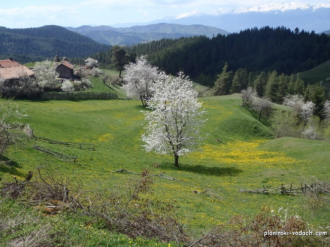 Spring views in Rhodopes