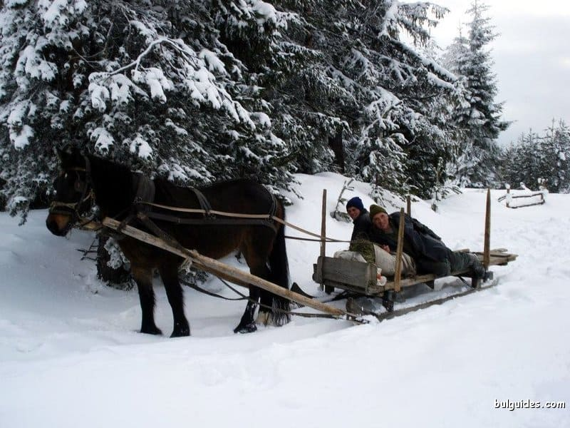 Locals collecting wood on a sledge, Rhodope Mountains