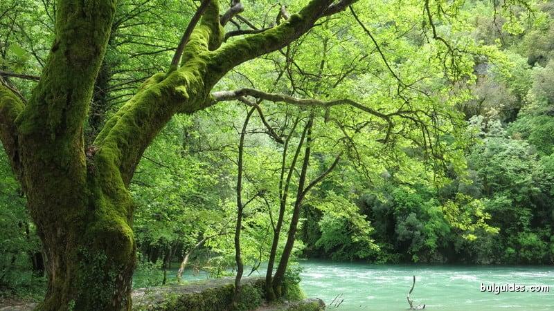 Springs of Voidomati