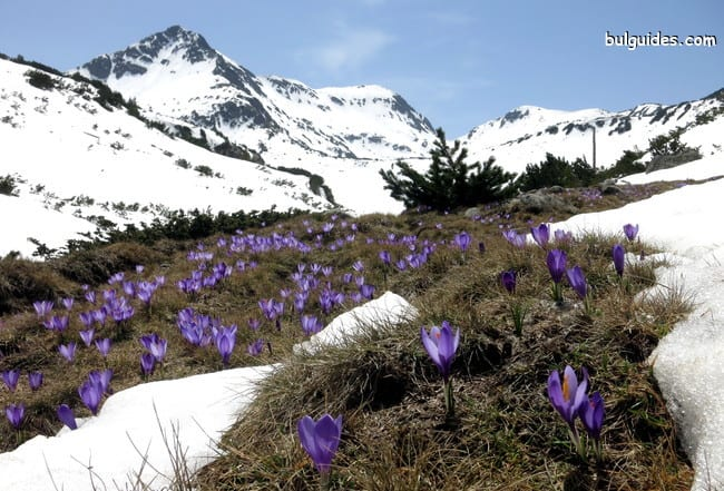 Spring comes at Demyanitsa Valley