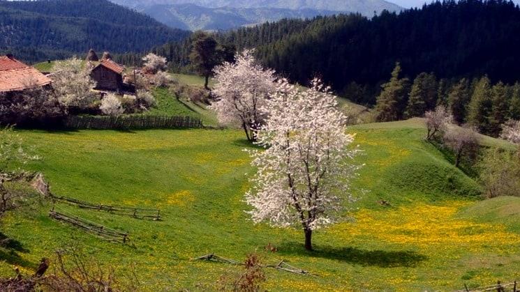 Spring in the Rhodopes