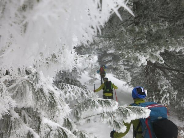 Ski touring the forests of Pirin