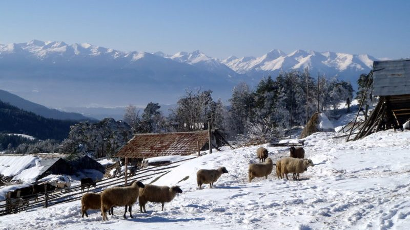 Snowshoeing Ortsevo
