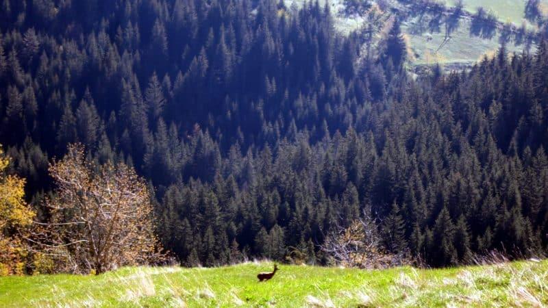 Western Rhodopes Gela