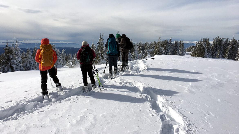 Сюткя снегоходки