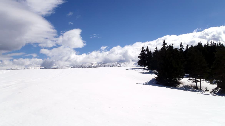 Зекирица със снегоходки