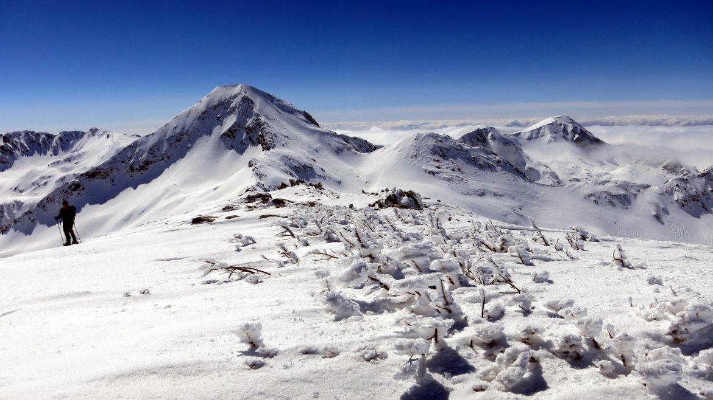 Снегоходки Хвойнати